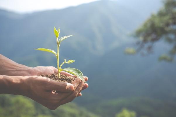 Importancia de una correcta gestión ambiental